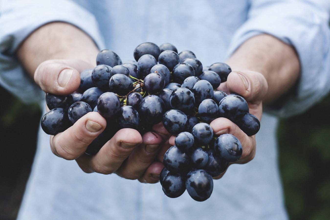 Uva utilizzata ella produzione di vino dalla Cantina Sociale di Viadana